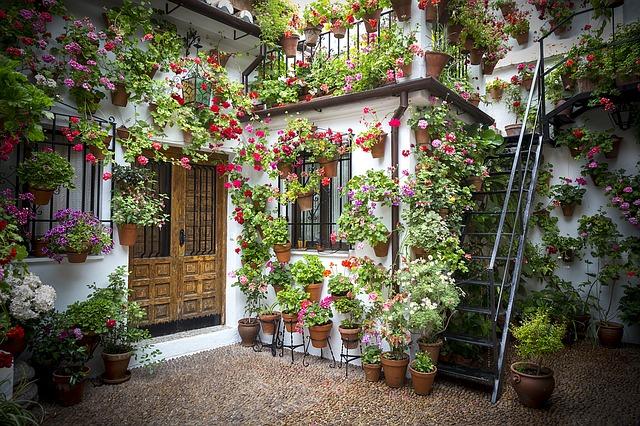 Jakie kwiaty wybrać do domu?