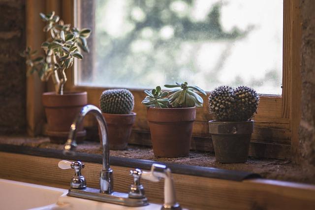 Kaktusy na kuchennym oknie